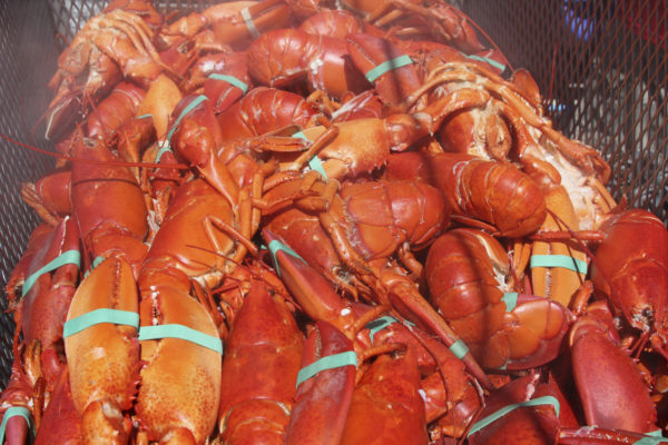 Boiling lobsters alive ruled an act of cruelty in Switzerland