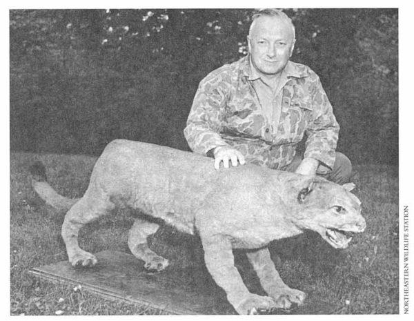 puma extinction