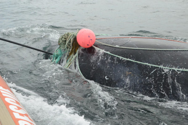 Slow down for right whales in waters south of Nantucket, feds say