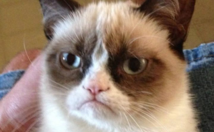 Image of: Tardar Sauce Grumpy Cat Owner Awarded Over 700000 In Lawsuit Cat Still Wont Smile The Telegraph Grumpy Cat Owner Awarded Over 700000 In Lawsuit Cat Still Wont