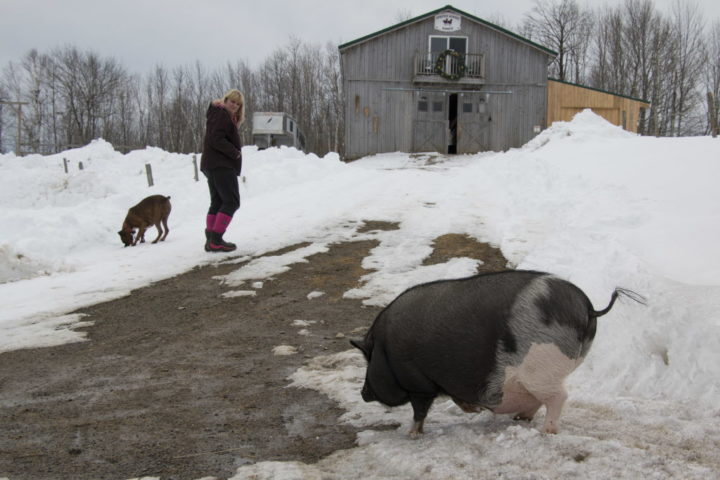 Indoor 200-pound pig named Jeff 'thinks he's a dog,' owner says
