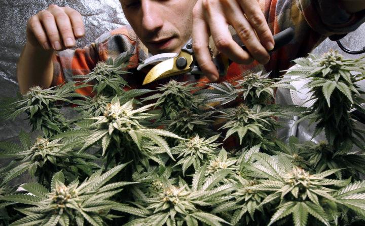 Senate votes to approve marijuana bill