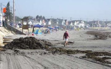 Girl, 9, stung by jellyfish at Maine beach — York — Bangor Daily