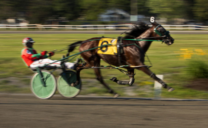 10769303_H20880884 720x445 local sports harness racing results, starters; golf scores