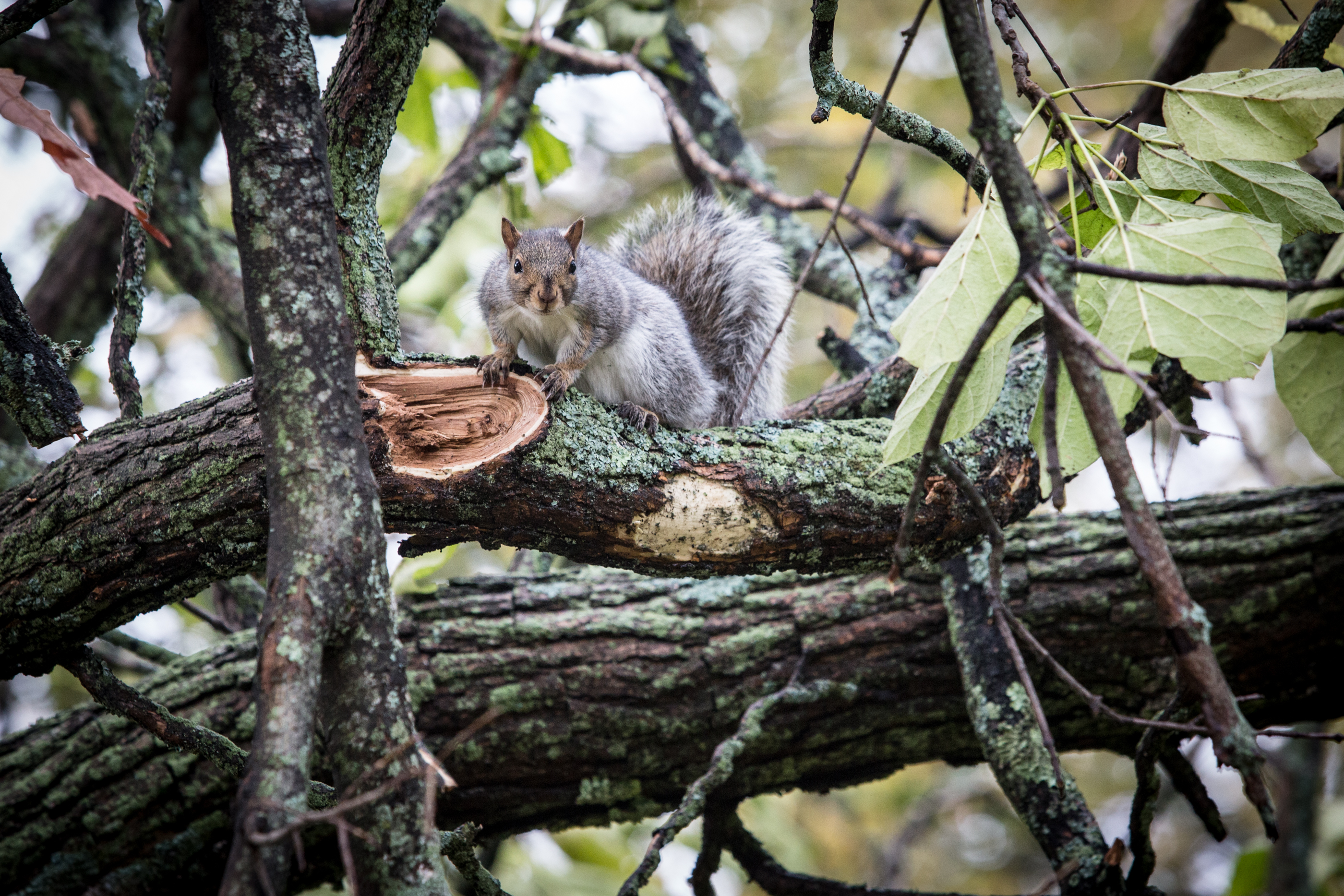 Squirrels have taken over this Bangor neighborhood — Homestead ...