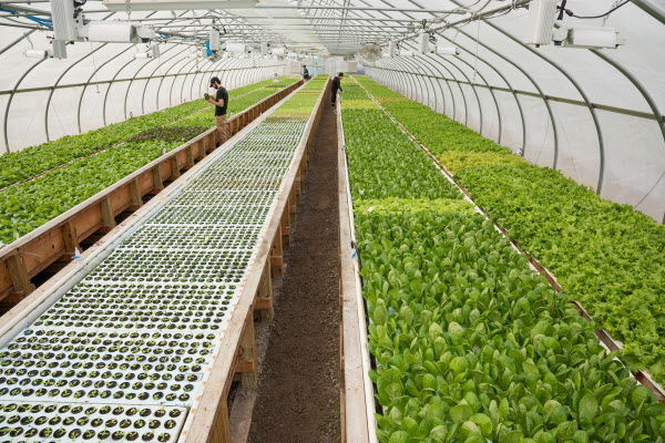 This farming style that skips soil and adds fish is growing in popularity