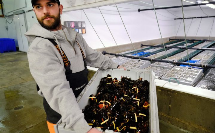 Maine lobster company pursues new customers in Korea, Vietnam to