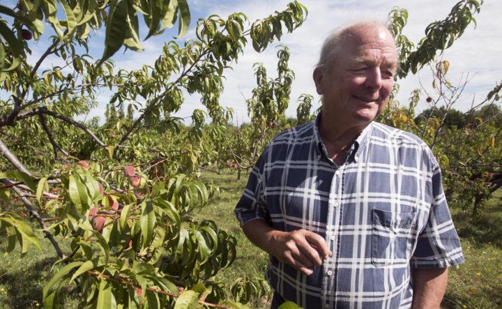 Albion peach farm gives visitors 'a drip down your chin