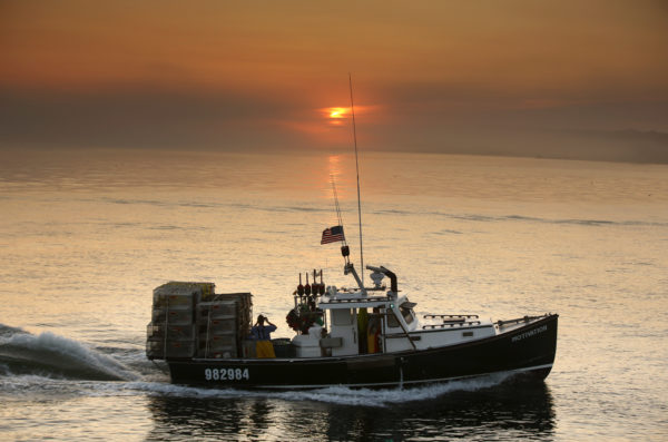 How an invasive species or pig hide could solve Maine's lobster bait crisis