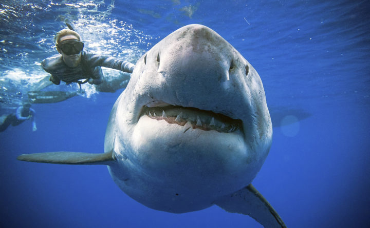 A family was reeling in a fish off Cape Cod  Then a great white