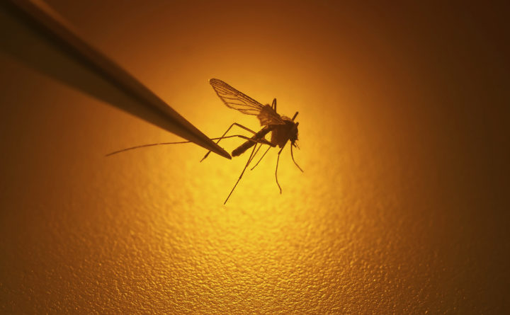 Residents warned to avoid mosquitoes after EEE virus found