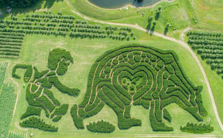 Prize-winning Treworgy Orchards corn maze celebrates classic Maine children's book