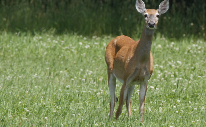 Check this list to see if you got your any-deer permit