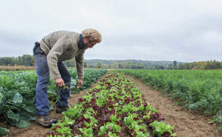 Maine farmers overcome challenges to comply with new federal food safety regulations