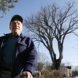Clones will help Maine's famous elm tree named Herbie live on — for now