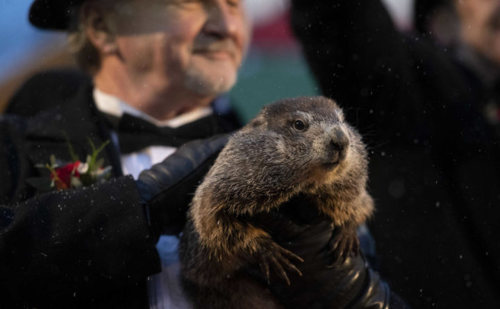 Groundhog Day 2020: PETA calls for robotic groundhog to replace Punxsutawney Phil
