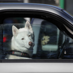 Maine proposal to let people save pets from cars appears dead