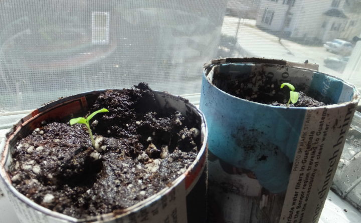 6 Ways To Make Diy Seedling Containers To Start Your Plants