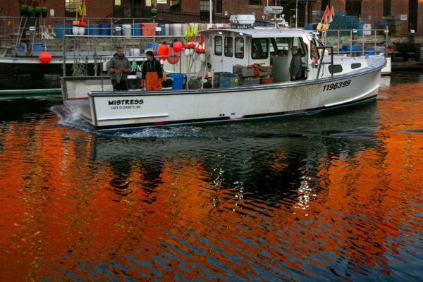 Lobstermen don't need all the traps they use, research claims - Bangor Daily News