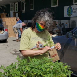 One Tomato program seeks to spur interest in gardening