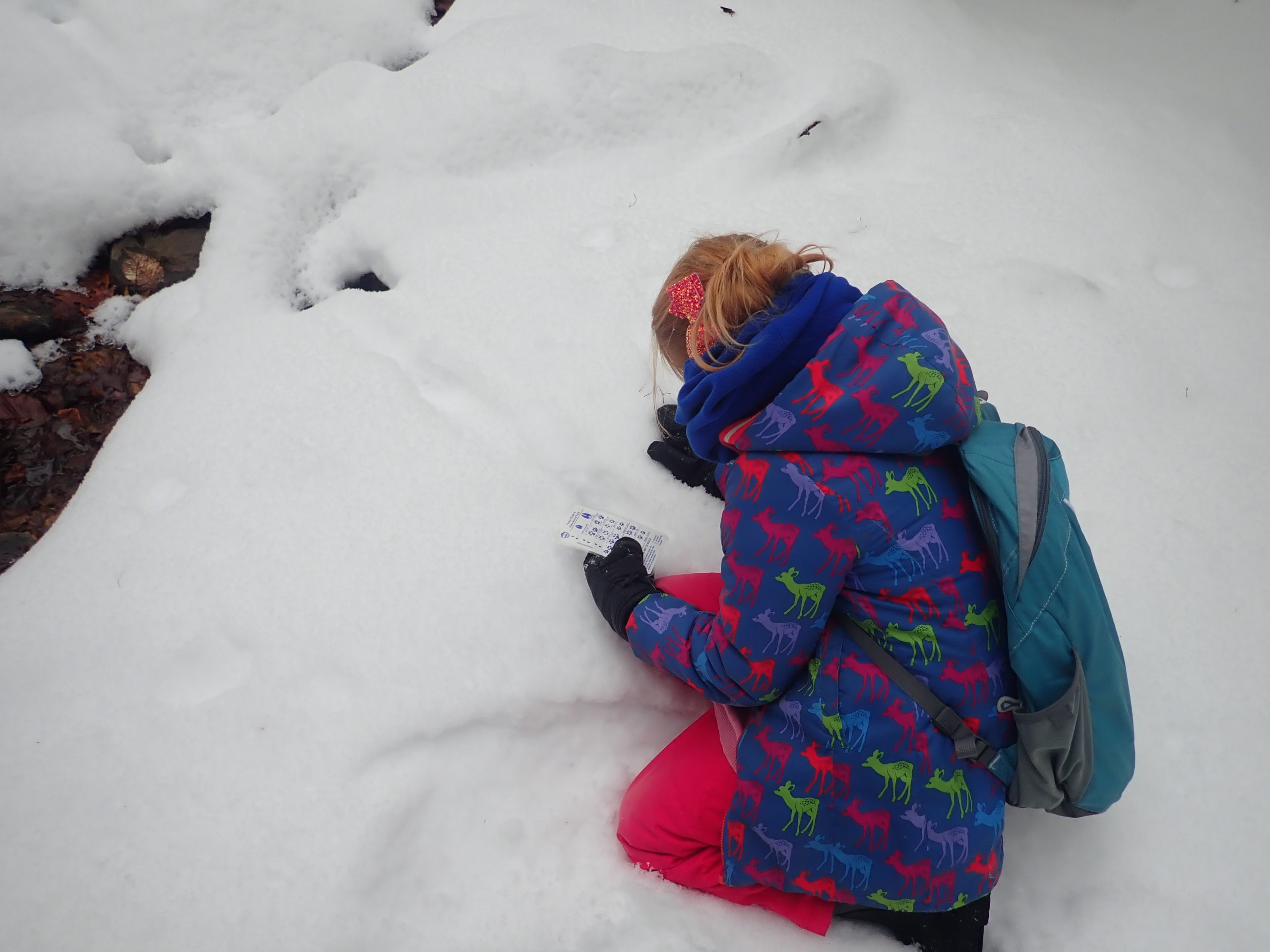 Snowy trails at Marsh River Preserve in Edgecomb provided Hearty Roots Outing Club participants with perfect conditions for identifying animal scaled.